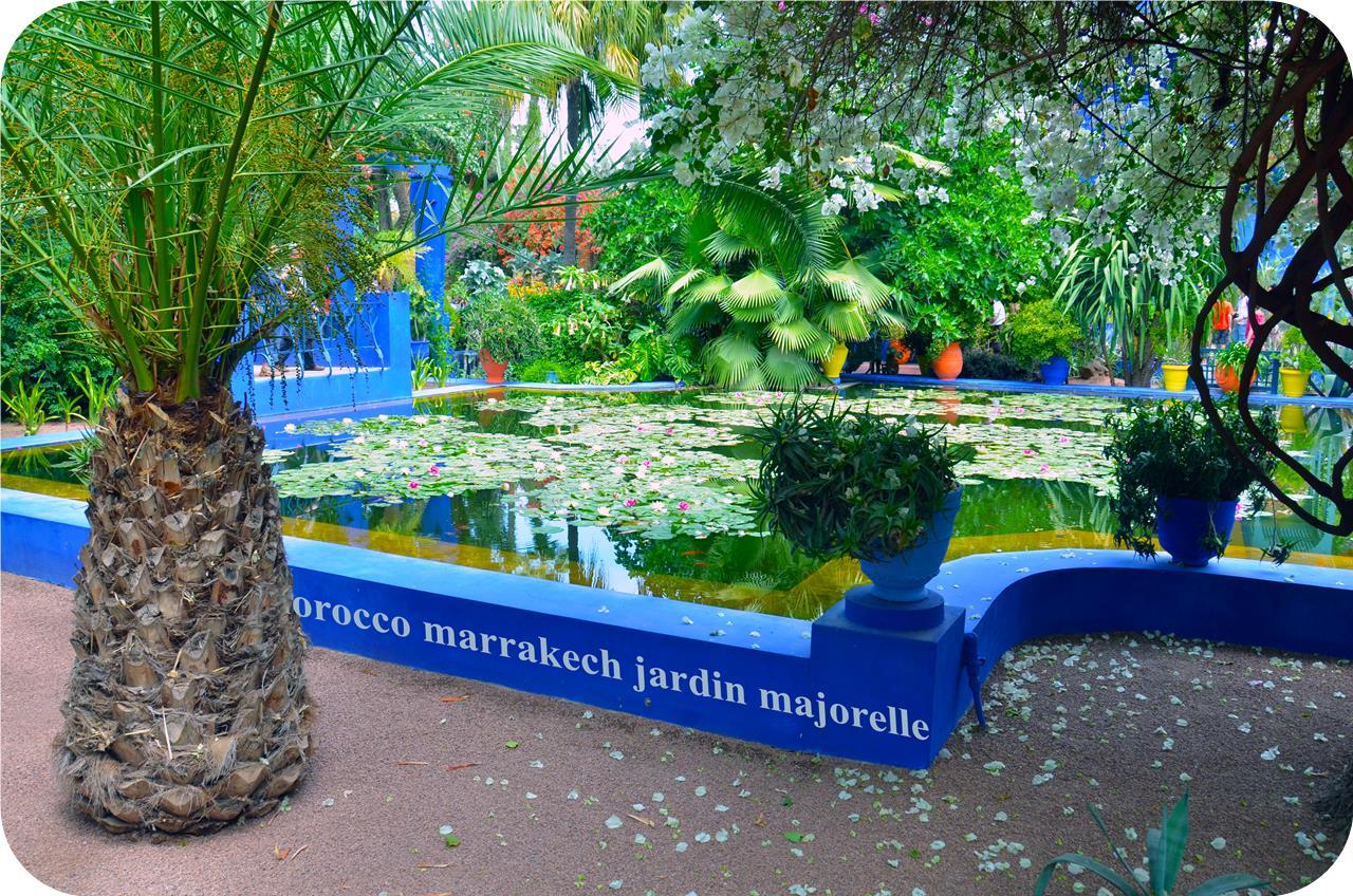 Morocco brophyblog - Jardin majorelle marrakech photos ...