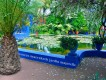 1304220830 - 000 - morocco marrakech jardin majorelle lillypads and more