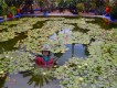 1304220832 - 000 - morroco marrakech lilly pond with dr chanUPDATE