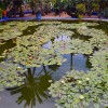1304220832 - 000 - morroco marrakech lilly pond